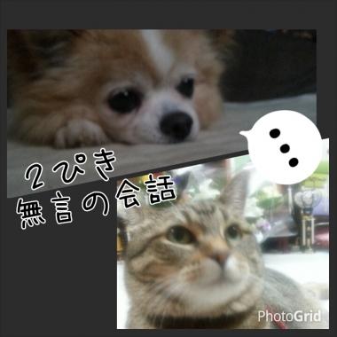 PhotoGrid_1408409573863.jpg