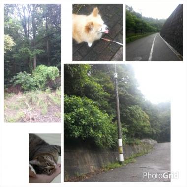 PhotoGrid_1408839947833.jpg