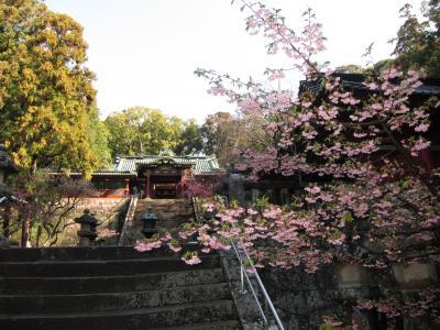 東照宮の桜upload