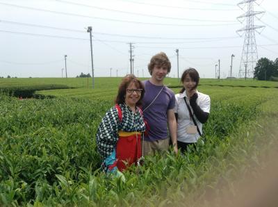 グリンピア茶畑