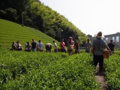 森内農園茶畑07312014