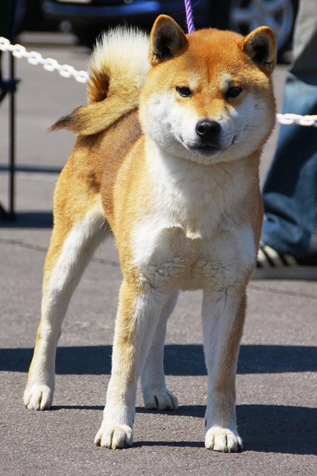yasuoonuma.jpg
