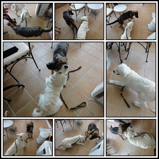 cats-1_201408020940195e5.jpg