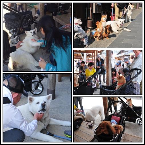 cats-3_20140427224547c6e.jpg