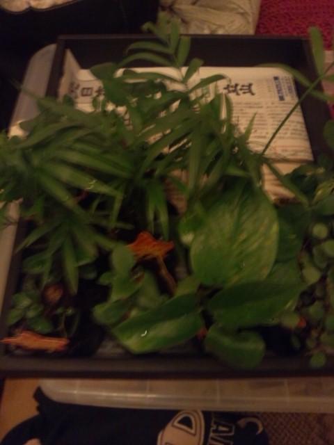 2014.03観葉植物
