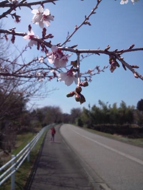 2014.04桜