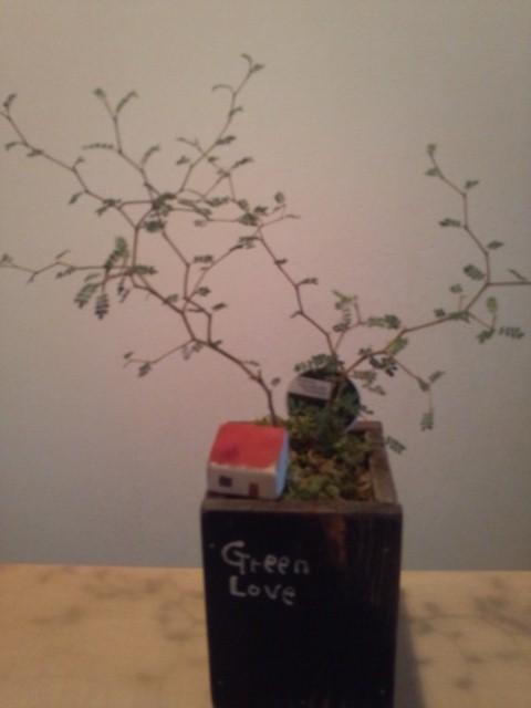2014.04妖精の住む木