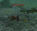DragonsProphet_20140718_094443.jpg
