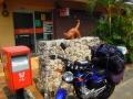 4月21日 郵便局前のイリオモテヤマネコ