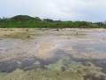 4月21日 星の砂ビーチ干潮 その3