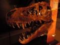 6月25日 カブトガニ博物館 化石 その1