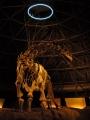 6月25日 カブトガニ博物館 化石 その2