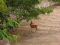 6月18日 鏡池の鹿