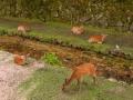 6月18日 鹿の群れ