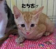 tachikichi14.jpg