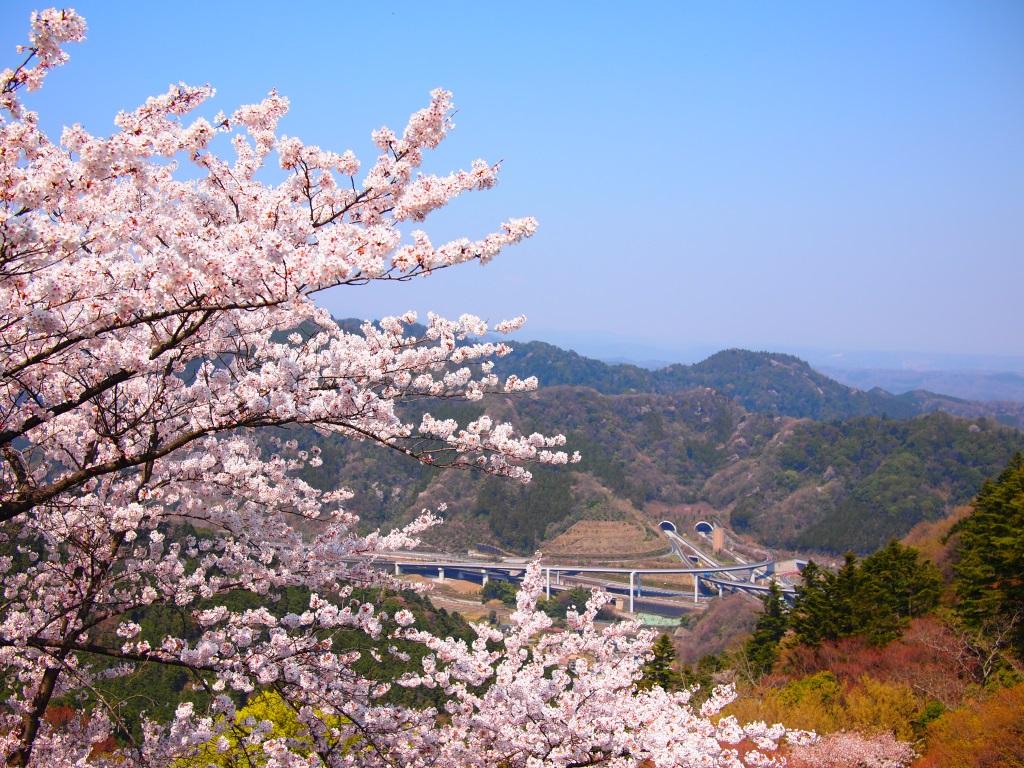 山と桜とトンネルと