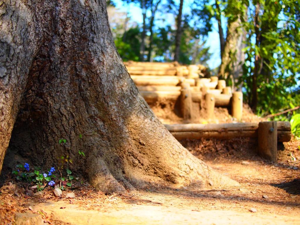 木の陰に小さき花