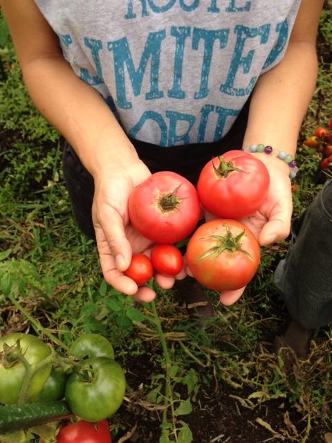tomato2014_08.jpg