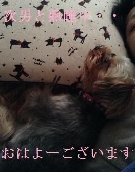 朝早い時間です。次男と眠ってるゴンちゃん^^