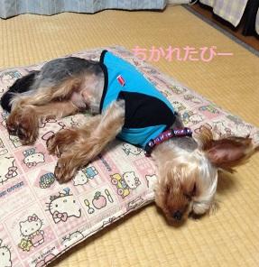 ゴンちゃん、お疲れ^^