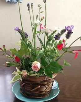 庭の花たち^^