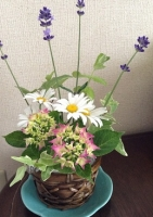 紫陽花でミニアレンジメント^^