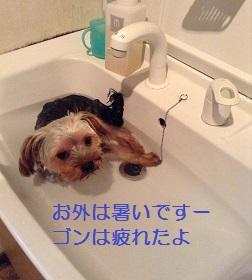 ゴンちゃん、洗面台で寝てしまいました^^