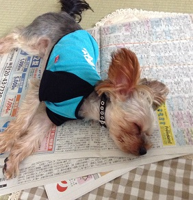 ゴンちゃん、すーすー寝ていました^^