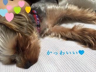 ゴンちゃん、おやすみ^^