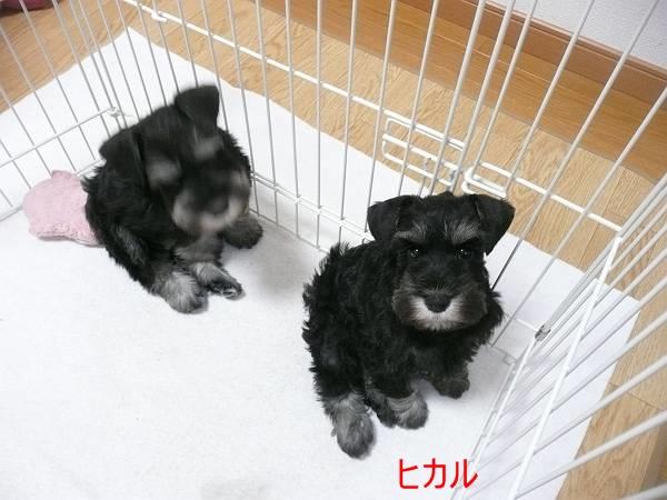 あさひっ子ヒカル3月1日-s