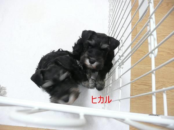 あさひっ子ヒカル3月3日1-s