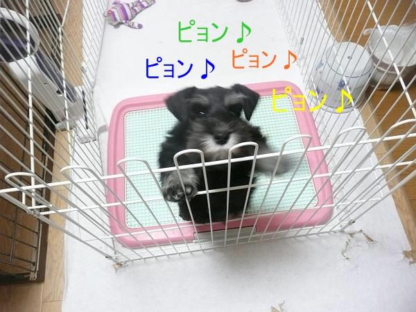 あさひっ子ハナ3月17日2-s
