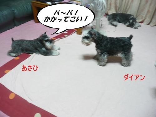 ダイアン&あさひ8月4日