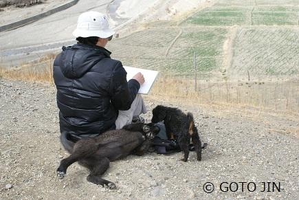 チベット犬02
