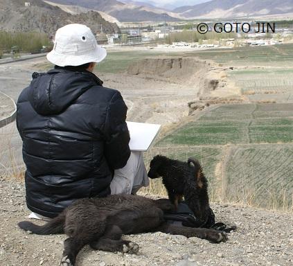 チベット犬03