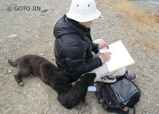 チベット犬04