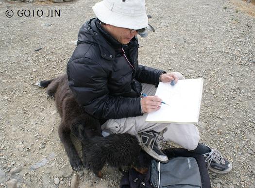 チベット犬05