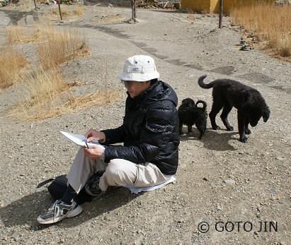 チベット犬06