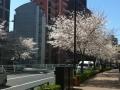 写真(H26年4月)
