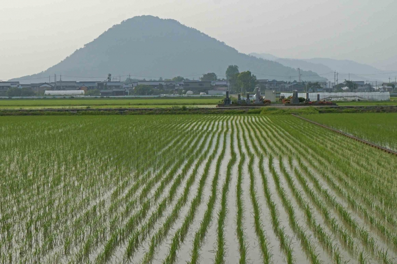 530yamamotoyama