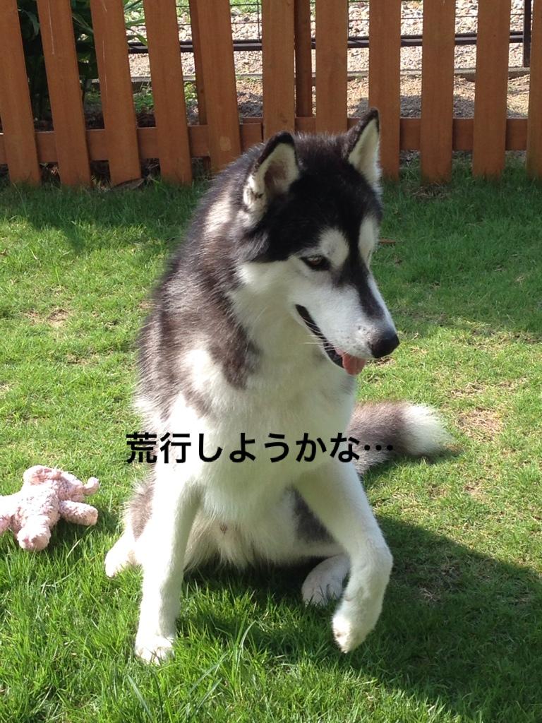 fc2blog_20140726120100ac0.jpg