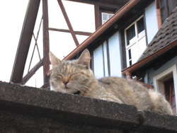 080713 Cat in Alsace