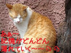 アルザス 猫 記憶が薄れていく~