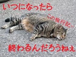 アルザス 猫