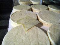 アルザス チーズ農家 熟成庫 若いマンステール