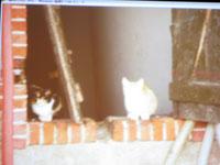 マルク・ペノ セミナー 猫