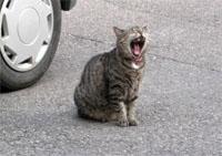 アルザス リボーヴィル 猫2