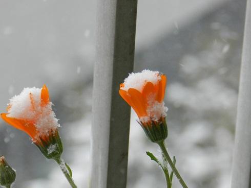 雪の花1小