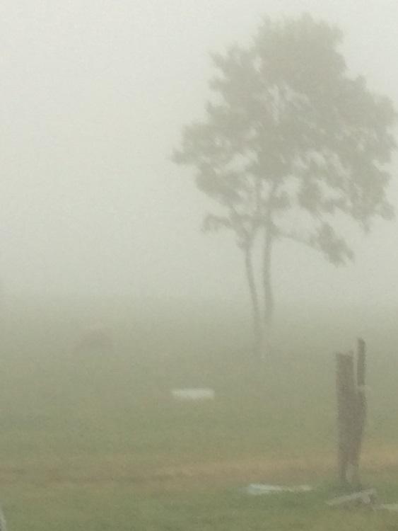 霧の長門牧場