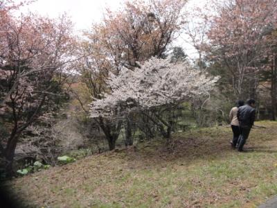 桜・牡蠣祭り 011
